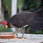 Aussie Brush Turkey by Magee