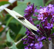 Butter Fly by wahboasti