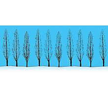 Poplars in a blue sky Photographic Print