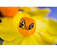 Ladybird Cup. Photographic Print