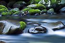Moss Respite by Michael Howard