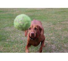 Amber's Tennis Ball Photographic Print