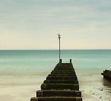 Seagull by Rick  Senley