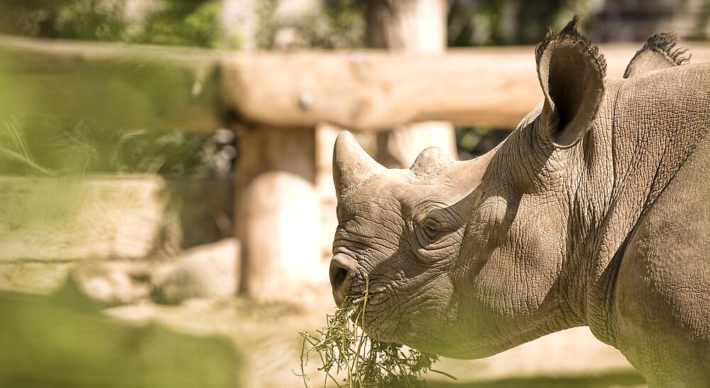 Rhino by JendrikW