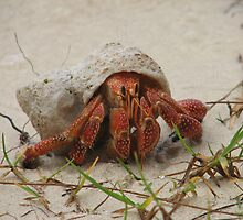 Little Crab by yolanda