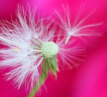 A beautiful weed II by Melinda Gaal