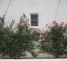 Bougainvillea in the Barrio by Michael Cohen