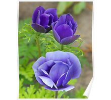 I Love blue Flowers! Poster