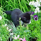 Kitten Flower by gillyenigmatic