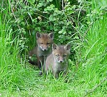 Fox Cubs by gillyenigmatic
