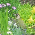 Woodpecker by gillyenigmatic