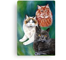 Beautiful Cats Canvas Print