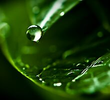 The Water Drop by Jose O. Mediavilla