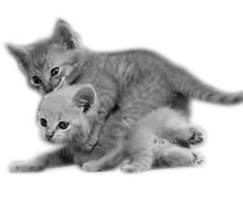 Kittens Wrestling WWK by burdart