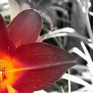 Flower Fire by Heather Rampino