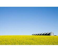 Alberta Canola Field Photographic Print