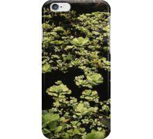 Waterborne Leaves iPhone Case/Skin