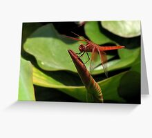 Male flame skimmer (dragonfly) Greeting Card