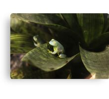 Glass Frogs Canvas Print