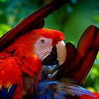 Scarlet Macaw Pair #1 by Kiki7000