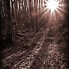 Sunbeams in the forest by Panalot
