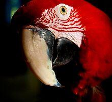 Green Wing Macaw #1 by Kiki7000