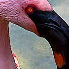Flamingo #3 by Kiki7000