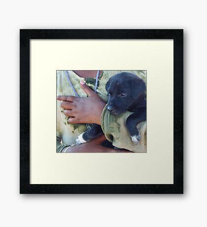 Puppy - Mahabalipuram, India Framed Print