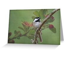 Chickadee amid the blossoms Greeting Card