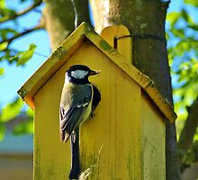 Great Titmouse by Janone