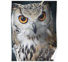 Studious Owl Poster