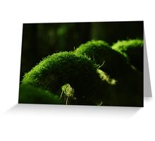 Mossy Coil Greeting Card
