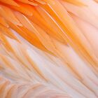 Feathers by Bill Morgenstern