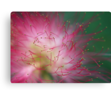 MIMOSA TIPS Canvas Print