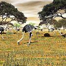 Ostrich by Walter Colvin
