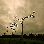Tree and Sky by tomcelroy
