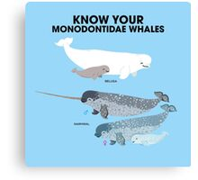 Know Your Monodontidae Whales Canvas Print