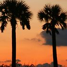 Twin Palms by kinz4photo