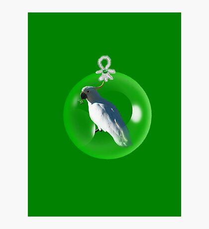Aussi  X-mas  cockatoo Card (green ) stock up , get ready for Christmas ! Photographic Print