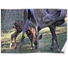 momma deer & this year's fawn Poster