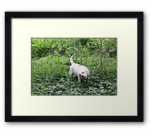 Salad Bar Framed Print