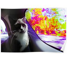 Trippy Kitty Poster