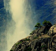 A Forest At The Bottom Of The Falls - Yosemite National Park, CA by davesdigis
