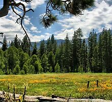 Mountain Meadow by Barbara  Brown