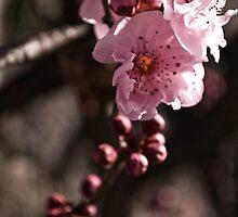 Spring by Kristi Robertson