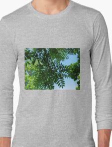 Canopy of Leaves Long Sleeve T-Shirt