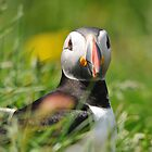 Puffin by Angela1