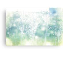 Dry field plants in a bright sun light with gossamer Canvas Print