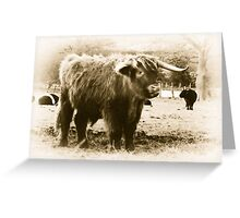 Highland Coo Greeting Card