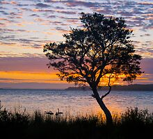 A  tree at sunrise by pennyswork